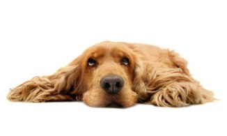 Inactivity in dogs leads to undesired behavior and health issues
