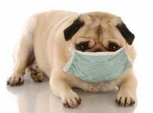 Can dogs catch human colds