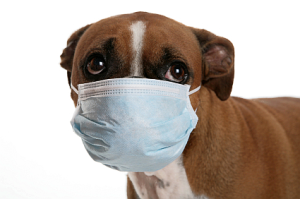 Protect your pet from the flu