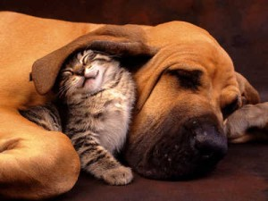 DOG-CAT-SNUGGLING