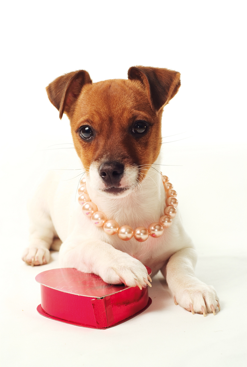 Valentines day pet dangers your partner in pet care - Valentines day pictures with puppies ...